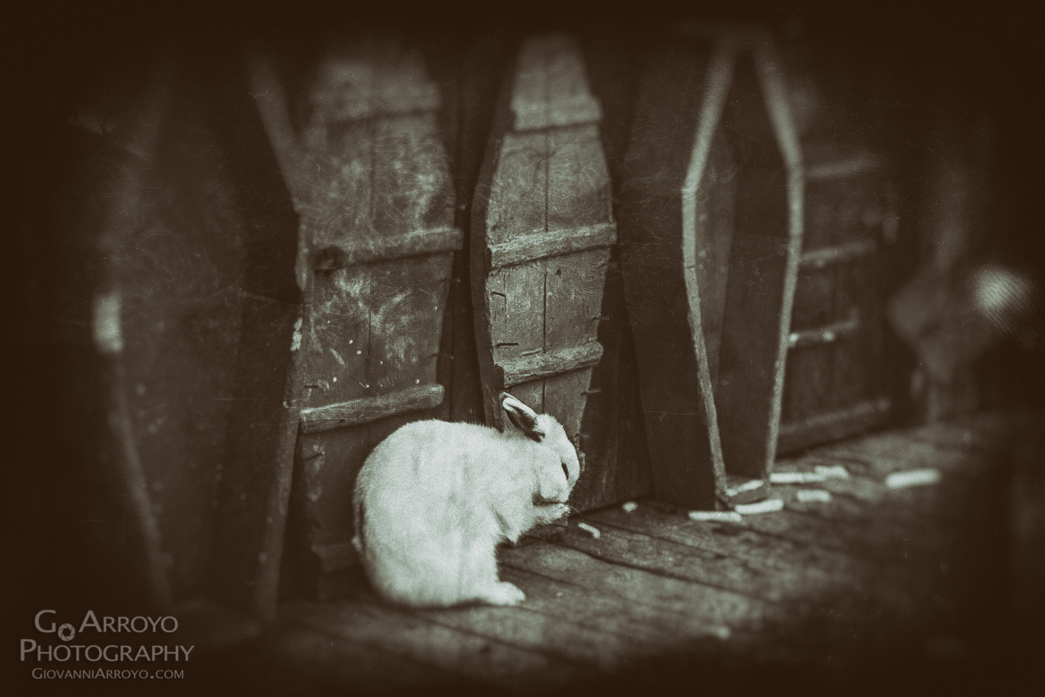Freaky Bunny Photograph by Giovanni Arroyo using Nik Analog Efex